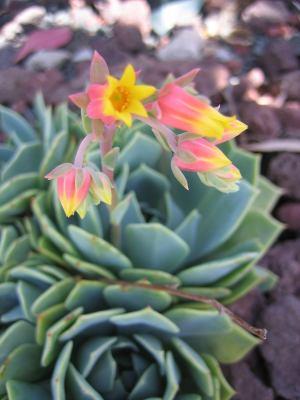 IMG_8276small_cactus